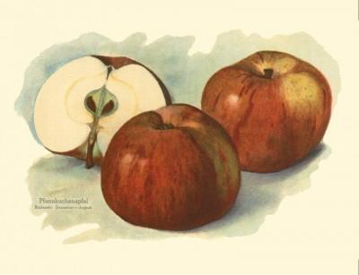 Apfel: Altlaender Pfannkuchenapfel