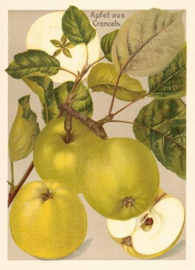 Apfel: Croncels