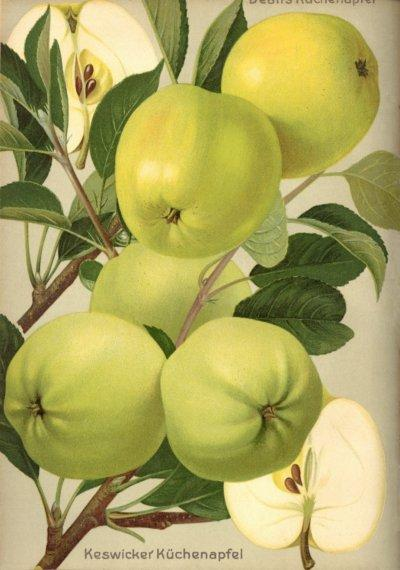 Apfel: Dean's Küchenapfel