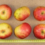 Apfel: Geflammter Cousinot