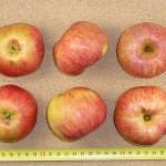 Apfel: Hauxapfel
