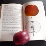 Apfel: Ingrid Marie