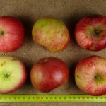 Apfel: Jakob Fischer