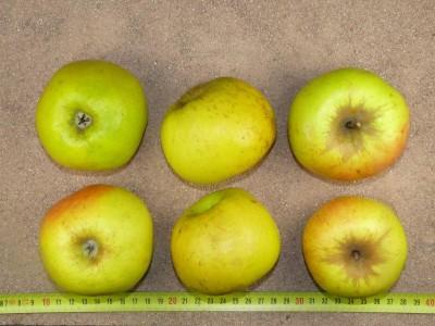 Apfel: Pojnik