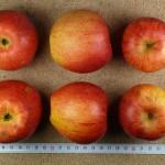 Apfel: Rötliche Renette
