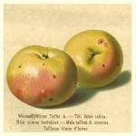 Apfel: Weisser Winter Taffet