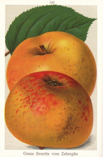 Apfel: Zabergäu Renette