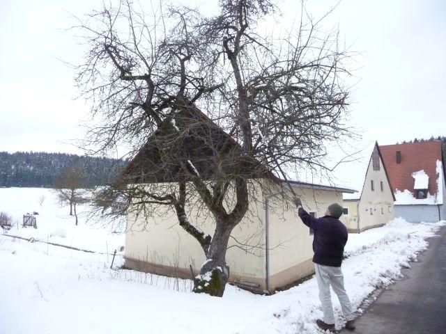 apfelbäume kaufen im alten land